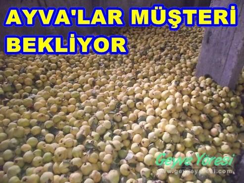 AYVAMUSTERI1