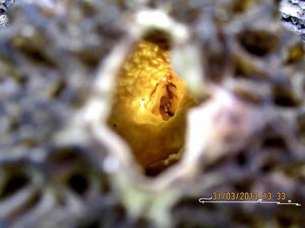 Geyve Mantar 3