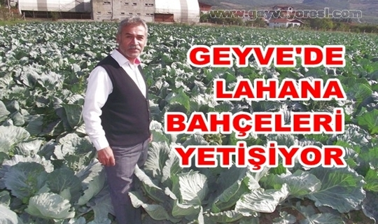 Geyve Haber  Lahana 160