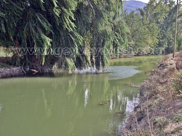 Kanal Geyve Mesire 10