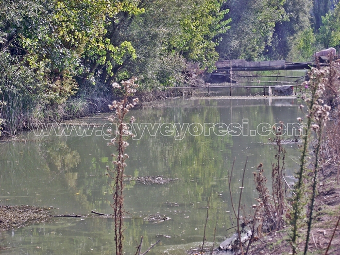 Kanal Geyve Mesire 24