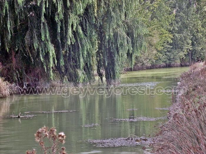 Kanal Geyve Mesire 7