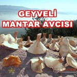 Mantar Geyve 040