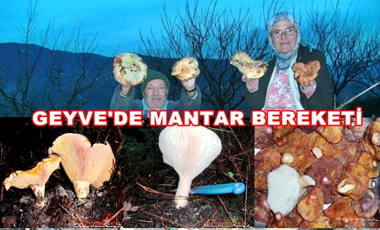 Geyve Mantar