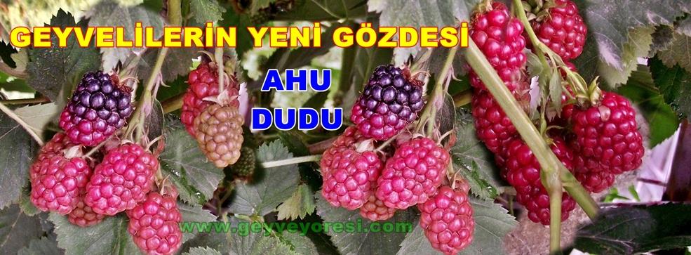 Geyve Ahu Dudu Meyvesi 1