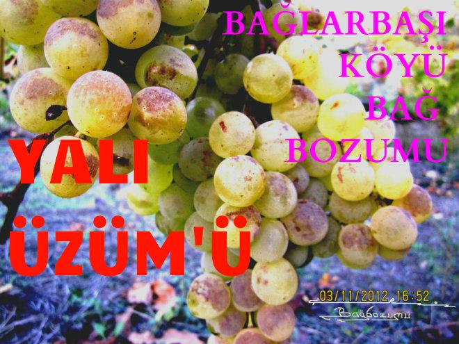 BABASIUZUM51