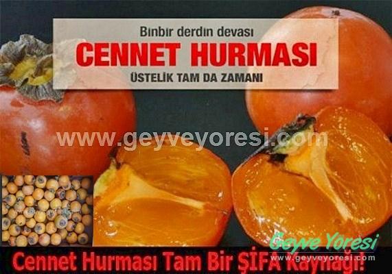 HURMA50