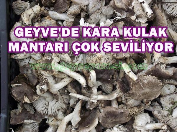 KARAKULAK MANTARI 3