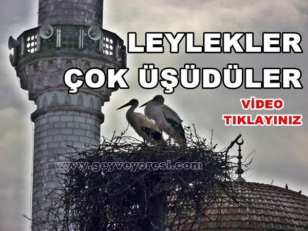 Geyve Leylek 1