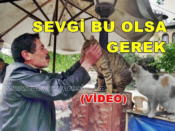 Geyve'de Hayvan Sevgisi 8