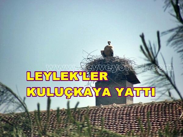 Leylek Geyve 2