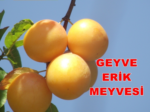Geyve Erik Meyvesi 6