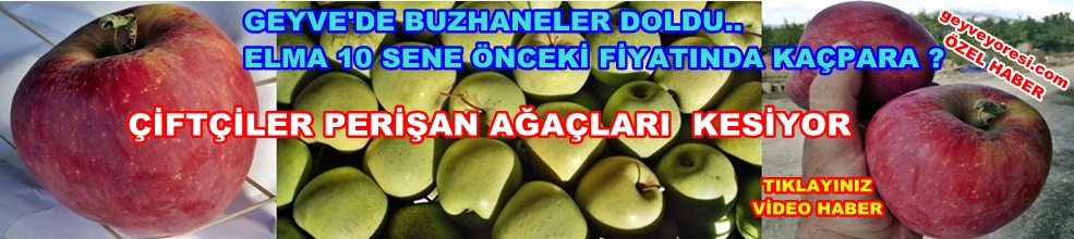 Geyve Elma 1
