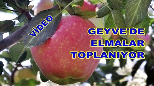 Geyve Elma 163