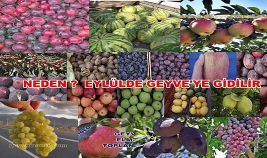 GeyveEylul
