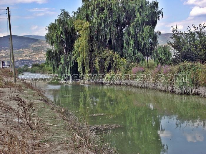 Kanal Geyve Mesire 14