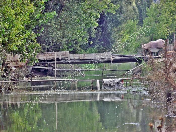 Kanal Geyve Mesire 18